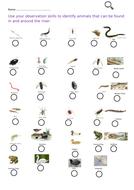 River Animals Worksheet
