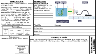 B8-Photosynthesis.pptx