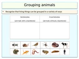 Year-4-invertebrate-groups-(lesson-3)-2.ppt