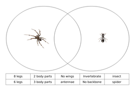 venn-diagram-insects.docx