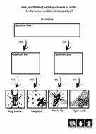 Minibeasts-Key-Template-3.pdf