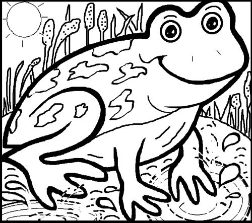 Frog Colouring Sheet