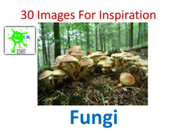 30-Images-For-Inspiration-Fungi.pdf