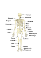 Completed-Skeleton.docx