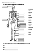 Label-the-diagram-by-using-the-bones-on-the-side-to-help-you.docx