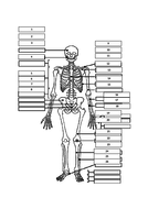 Skeleton-sheet.docx