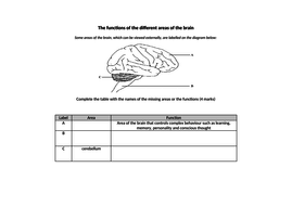 Edexcel GCSE Biology Topic 2 REVISION (Cells and control ...