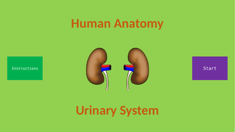Human-Anatomy---Urinary-System.pptx