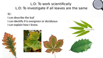 Observing leaves and classifying them