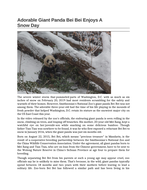 Adorable-Giant-Panda-Bei-Bei-Enjoys-A-Snow-Day.docx