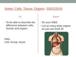 7Ab---Organs.pptx