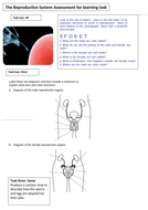 Lesson-1-Reproductive-system-worksheet.doc