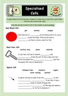 Specialised-Cells-woksheet-2.pdf