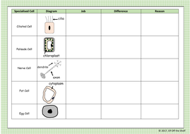 Specialised-Cells-Worksheet-1.pdf