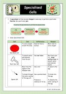 Specialised-Cells-Fact-Sheet--copy.pdf