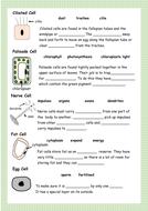 Specialised-Cells-worksheet-2A.pdf