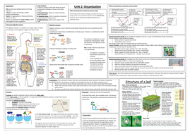 Unit-2-Organisation-summary-Digestive-and-Plant-systems.docx