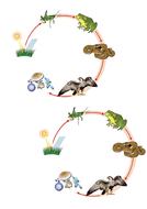 Lesson-1---Food-chain---Story-map.docx