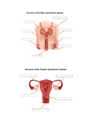 Reproductive-system-blank.docx
