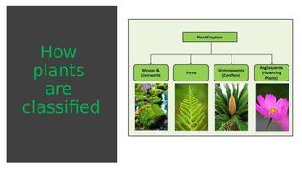 plant-groups.pptx