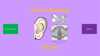 Human-Anatomy---Ear.pptx
