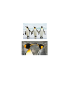 L2---Starter-Penguin-Pictures.docx