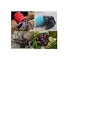 Hermit-crabs-using-plastic.docx