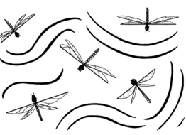 Beautiful Dragonflies Picture-Poem Sheet for Expressive Writing