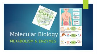8.-Enzymes---Metabolism.pptx