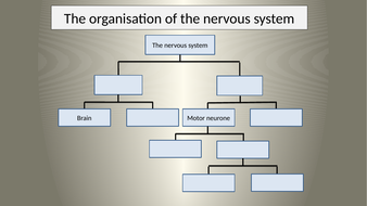 The-organisation-of-the-nervous-system-TO-COMPLETE.pptx