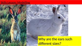 L4-Skills-Modelling.pptx