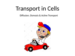 Transport-in-Cells.pptx