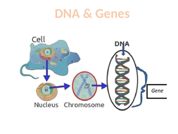 DNA-and-the-Genome.pptx