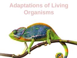 Adaptations-of-Living-Organisms.pptx