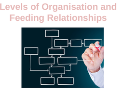 Levels-of-Organisation-and-Feeding-Relationships.pptx