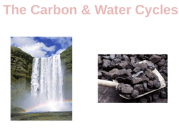 The-Carbon-_-Water-Cycles.pptx