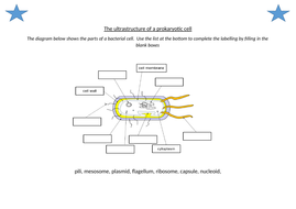 The-ultrastructure-of-a-prokaryotic-cell-STARS.docx