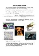 Surface-Area-teacher.docx