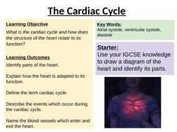 The-Cardiac-Cycle-TAH.pptx