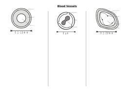 IAS / IAL Edexcel Biology Unit 1 Topic 1: Blood vessels & heart structure