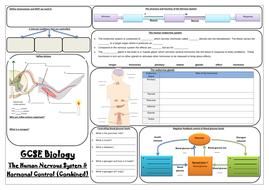 AQA GCSE Biology (9-1) - Paper 2 Revision Mats - Combined Sciences (Trilogy)