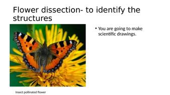 5)-flower-dissection.pptx