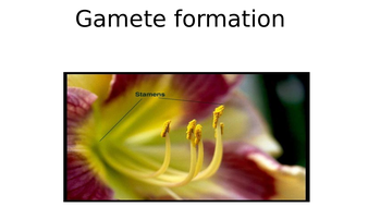 2)-Development-of-gametes.pptx