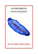Invertebrata: External parts book 3 - Platyhelminthes