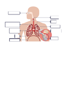 B4.5-Lungs.docx