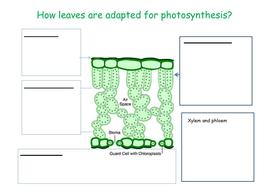 Leaf-diagram.docx