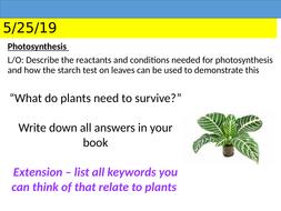 KS3 Photosynthesis and Gas Exchange