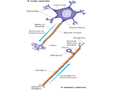 1.-Neuronal-Structure-Lesson-Resources.pptx