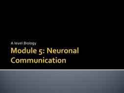 3.-Transmission-of-Nerve-Impulses-Presentation.ppt