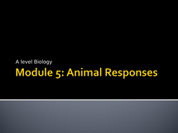 5.-Muscle-Research-Lesson-Presentation.ppt